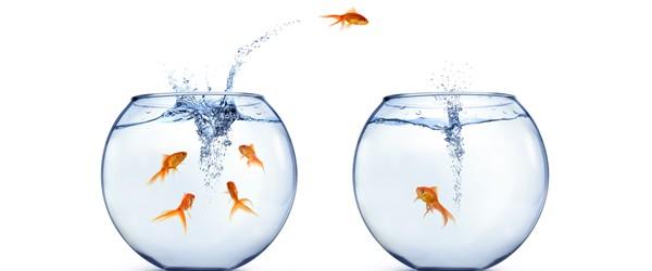 the_fish_principles