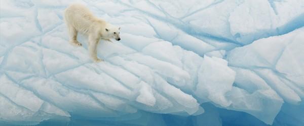 online_database_arctic