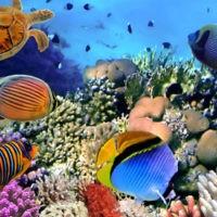 online_database_coral_reef