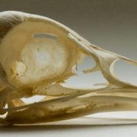 online_database_bones