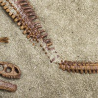 online_database_fossils
