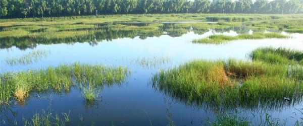 online_database_wetlands