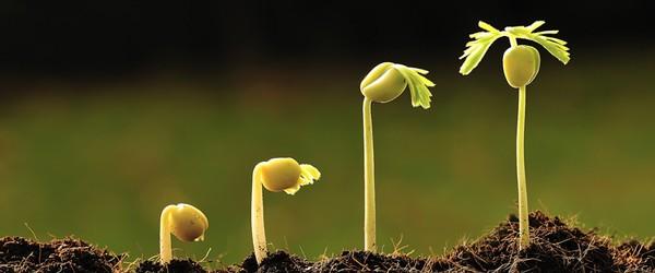 grow_online_crm
