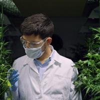 Cannabis execs: digitize operations or else